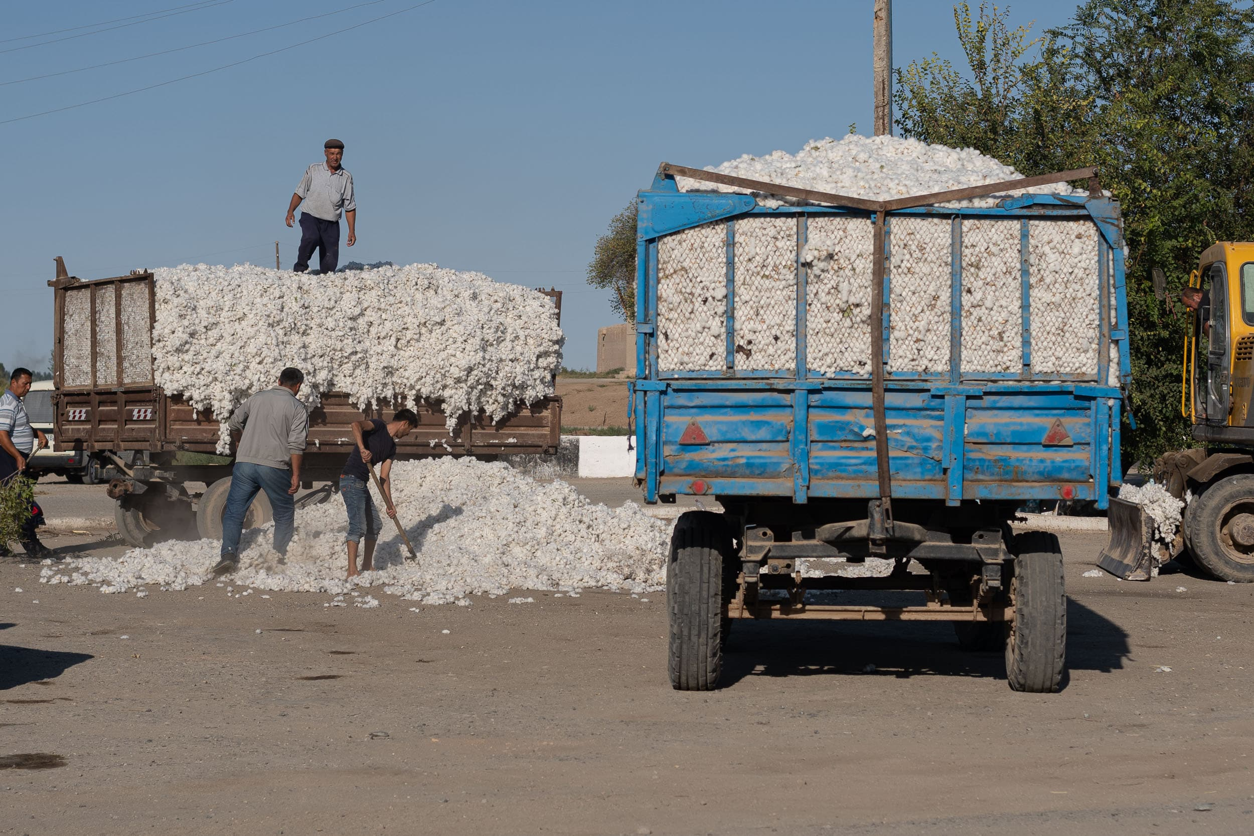 cotton farmers of Uzbekistan