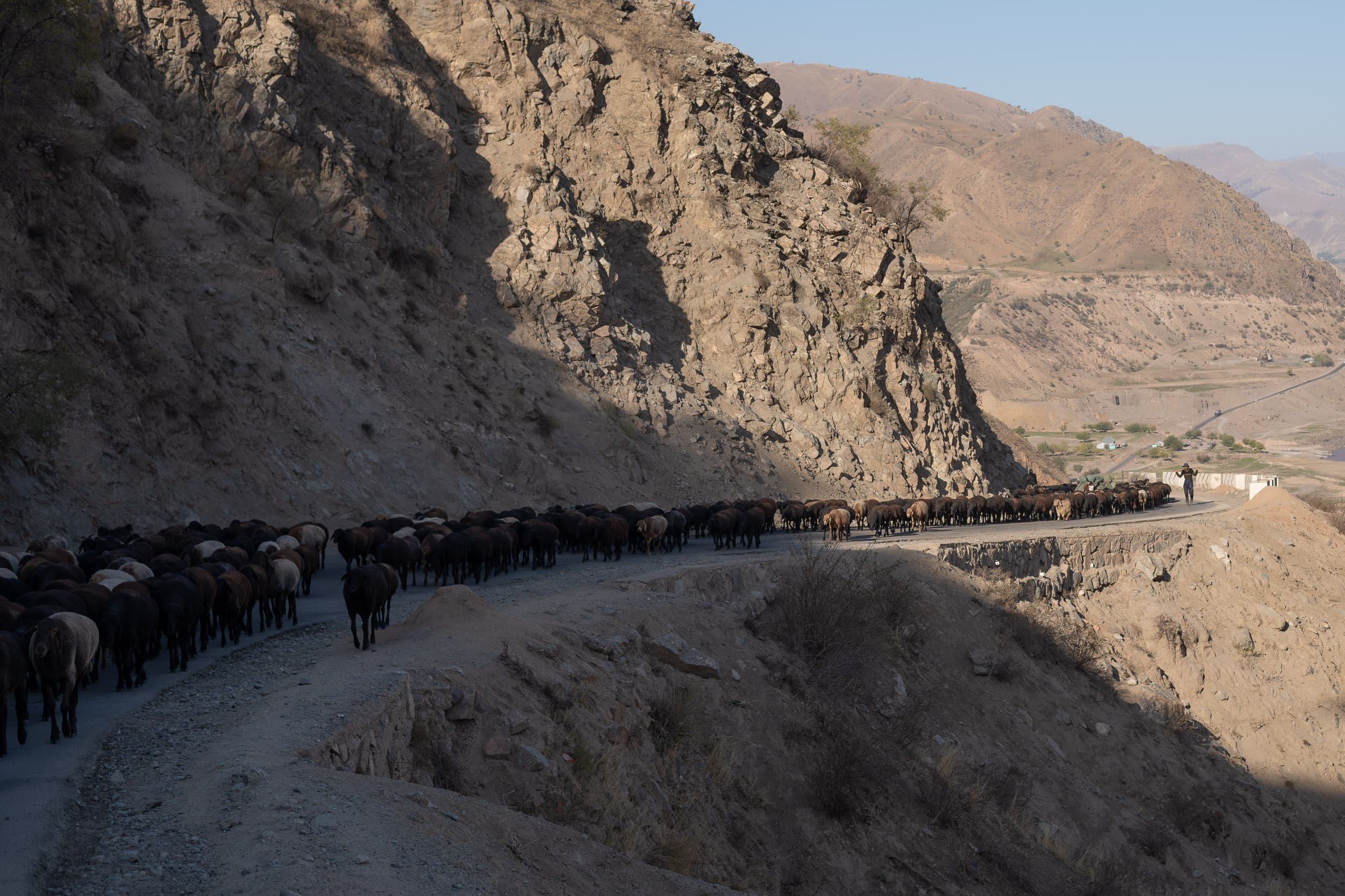 flock in the Pamirs