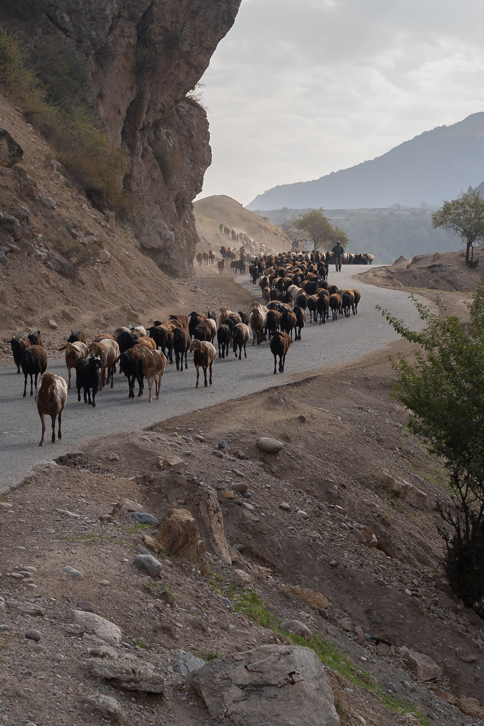 livestock flocks Pamir Highway