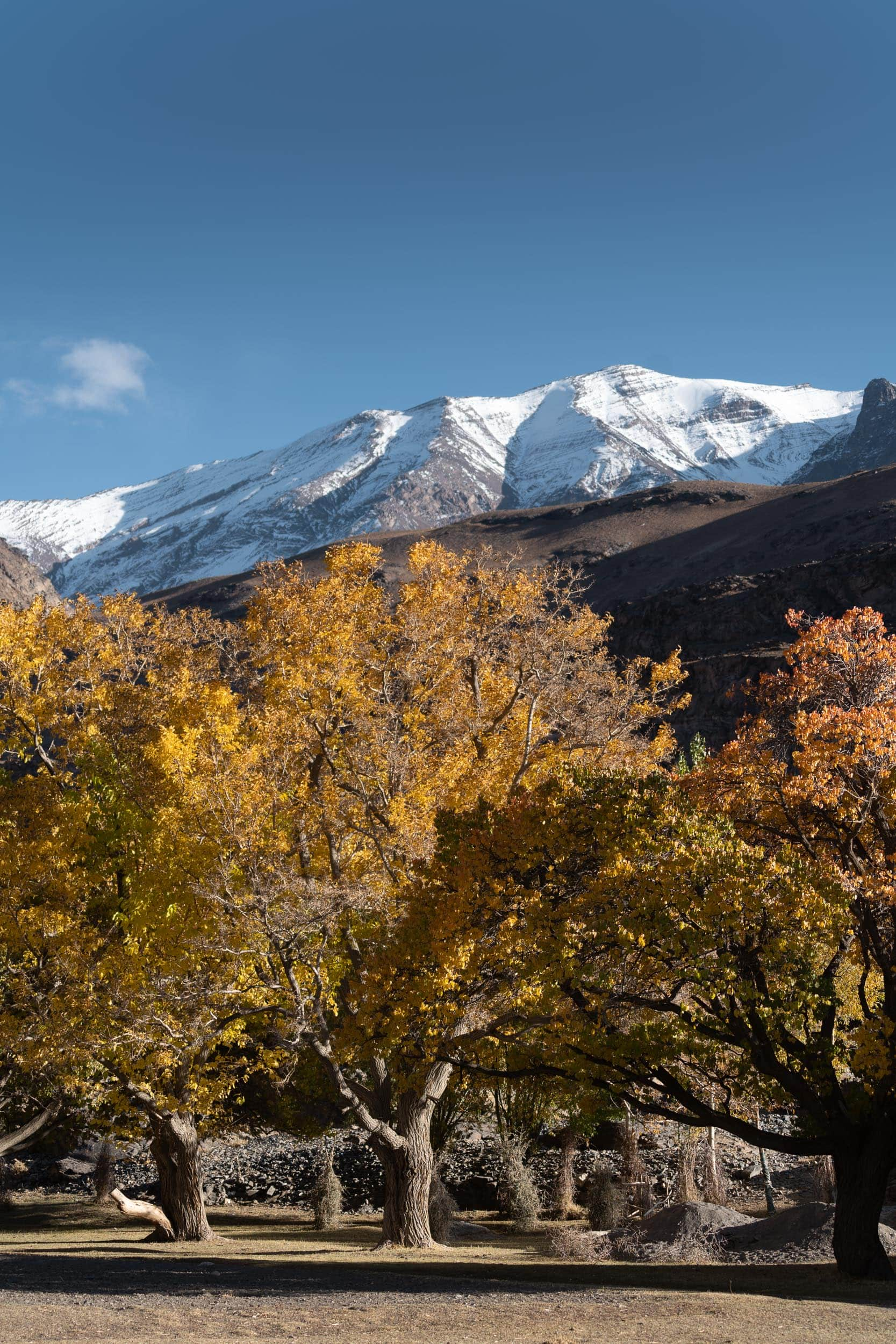 colorful trees and snowy mountains Tadjikistan